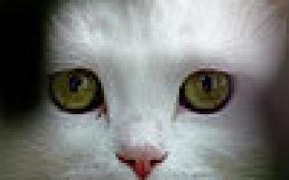 Автозагар Лореаль: отзывы о молочке Сублим бронз для загара, нежные салфетки, крем, гель и спрей