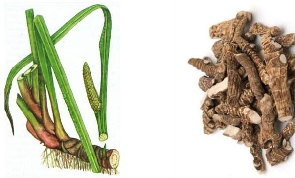 Корень аира от грибка ногтей: схема лечения и отзывы
