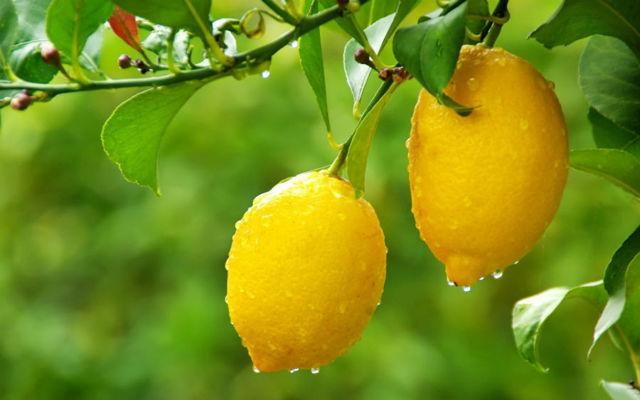 Как избавиться от веснушек в домашних условиях кефиром, перекисью водорода, лимоном, народными средствами, причины появления, профилактика , отзывы.