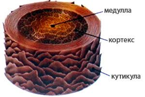 Биозавивка ресниц: отзывы о ламинировании, что лучше, в чем разница, чем отличается от завивки, отличия