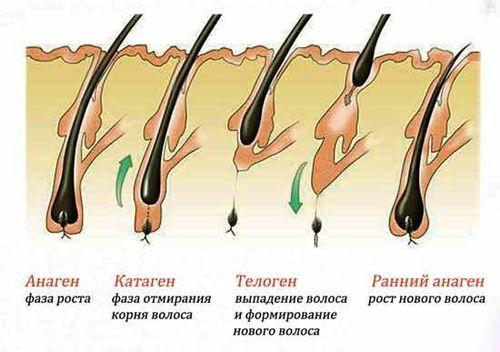 Лазерная эпиляция: на сколько хватает эффекта, что это такое, держится бикини после первой процедуры, по времени длится для лица женщин