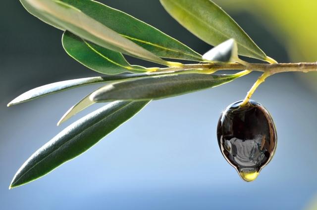 Масло для массажа: косметическое массажное для тела в аптеке, какое лучше использовать - вазелиновое, расслабляющее, разогревающее, базовое или оливковое